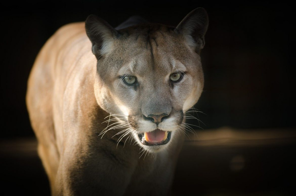 Utah hiker stalked by a cougar for 6 minutes while he sloooowly backed away