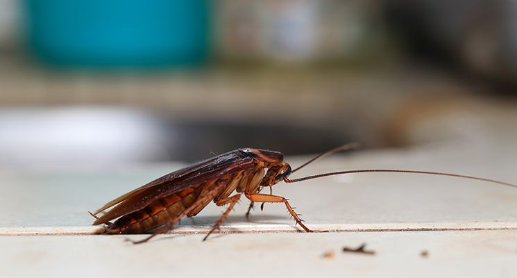 Why do you need pest control Sharjah?